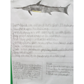 Sharks Factsheet