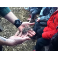 We got to see a tarantula!