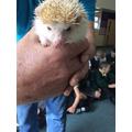A very cute hedgehog.
