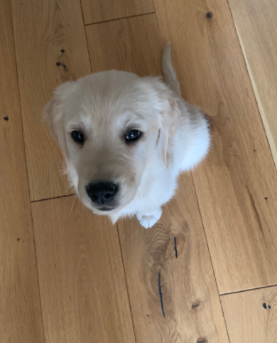 Barney aged 2 months old