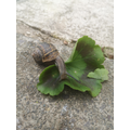 Helping the snail to find food.