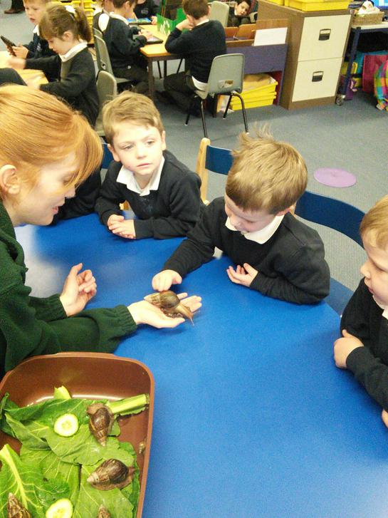 Handling Giant African Land Snails