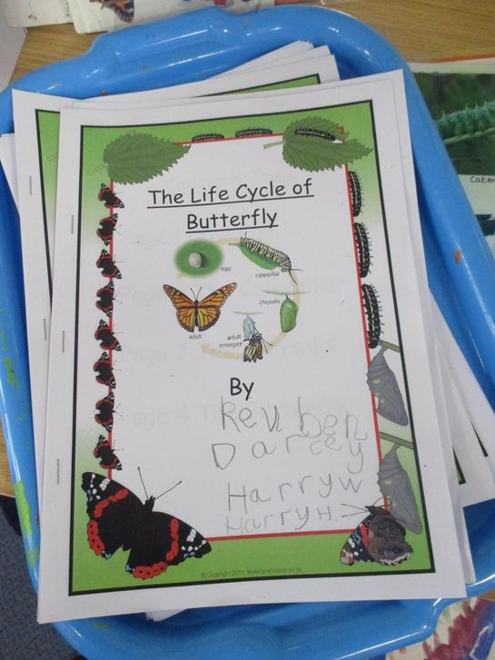 We have made some information books about butterflies