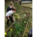 We explored the allotment.