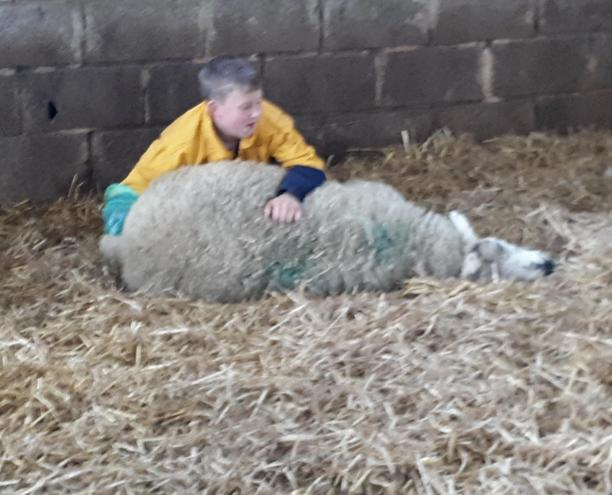 Real life learning.. helping a sheep give birth.