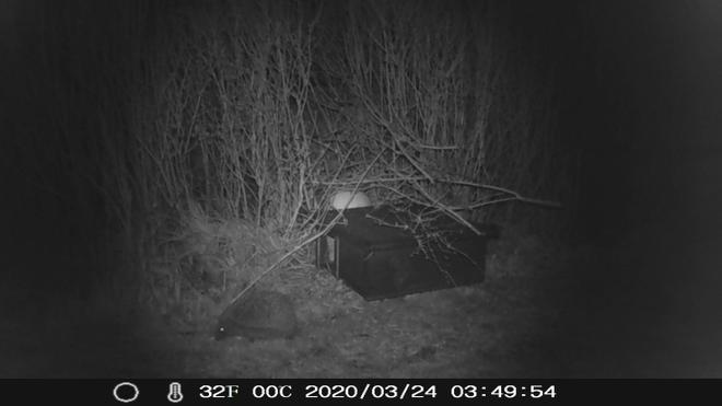 Trail cam...Camper has hedgehog neighbours.