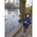Connor went for a frosty walk and found some ducks in the pond