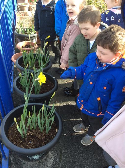 """""""It's a Daffodil."""""""