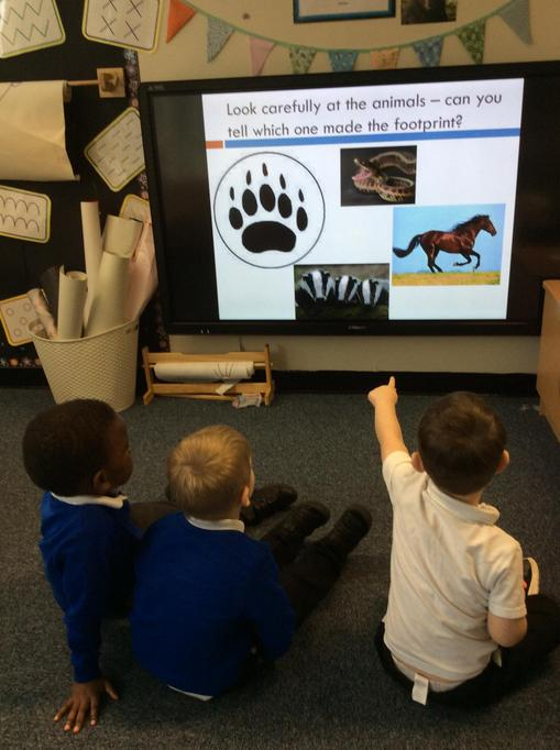We thought about which footprint belonged to which animal.