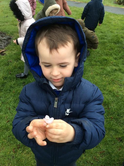 Hugo found a blossom flower on the ground.