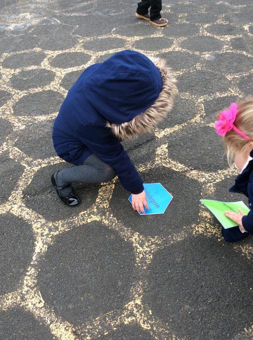 Callie found a hexagon pattern on the ground.