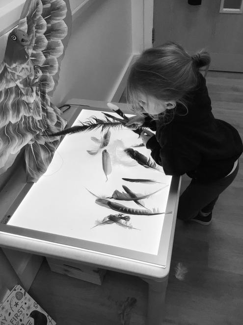 Exploring feathers on the light table.