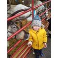Feeding Santa's reindeer