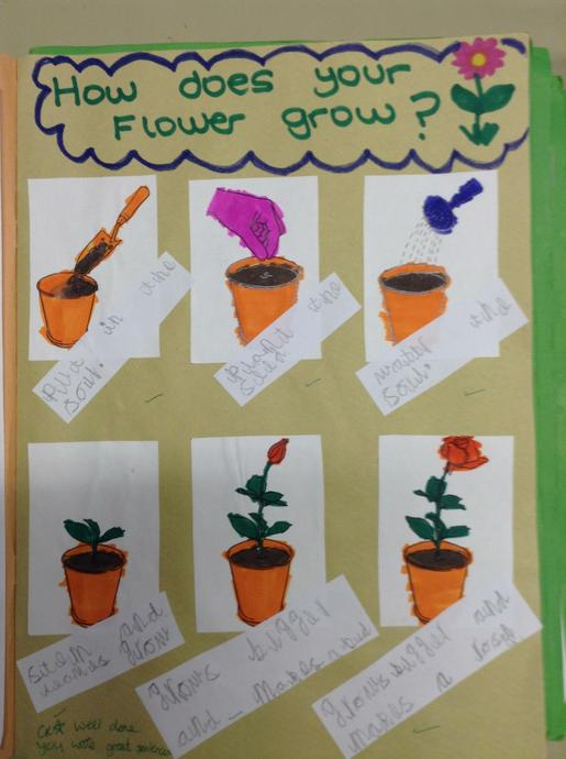 Sequencing how a plant grows.