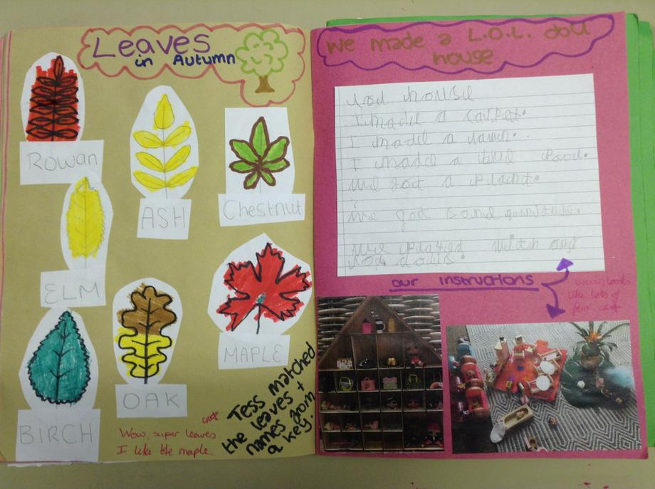 Identifying trees from leaves, Writing instruction
