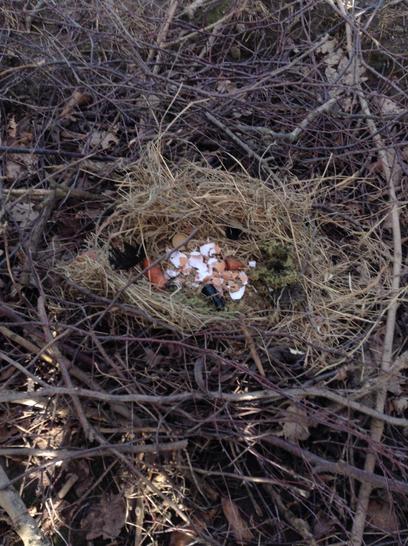 A dragon nest.