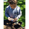Planting cress