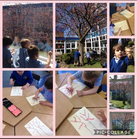 The children have been observing the changes to our blossom tree in school!