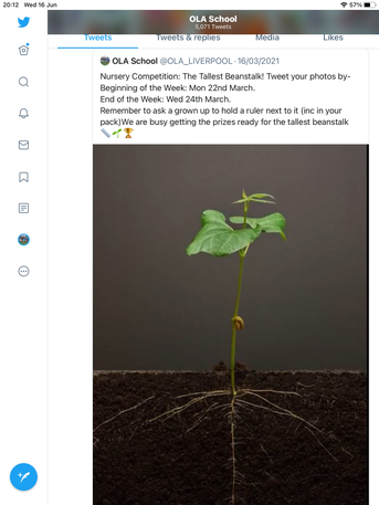 Bean growing competition