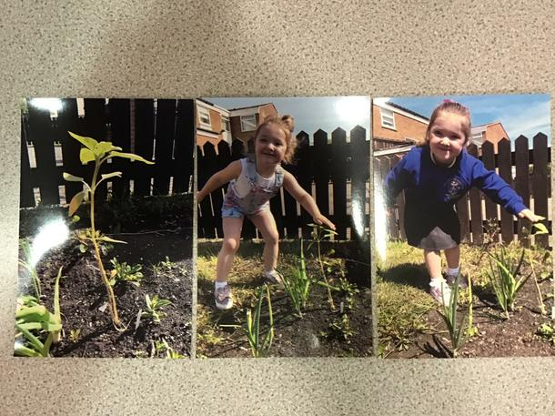 How are all our Mother's Day sunflower seeds doing??? Bonnie and her mum planted hers in the garden and it's growing taller and taller! Let's have a competition- whose can grow the tallest? 🌱🌻📏🏆🥇🥈🥉
