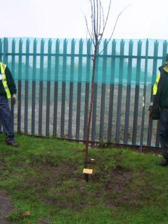 Reception children's tree is successfully planted.