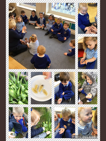 Minibeast hunt- we found a baby snail!
