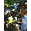 ...and lifted logs to investigate the habitats of slugs and beetles.