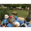 The giant tortoise was enormous...
