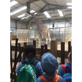 The giraffes were were beautiful but, smelly...