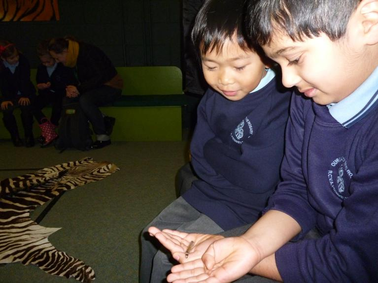 Holding a mealworm