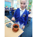 Planting our bean in compost.