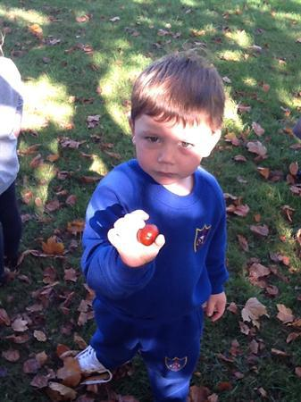 We found lots of conkers.