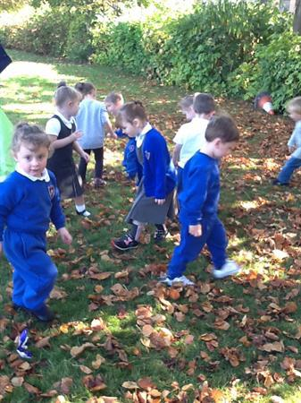 Looking for lots of different coloured leaves.