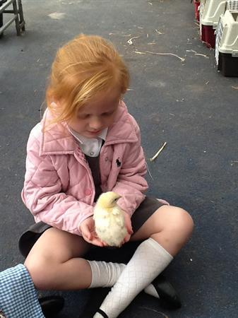 Holding the chick