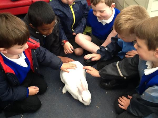 Stroking Buzz the rabbit.