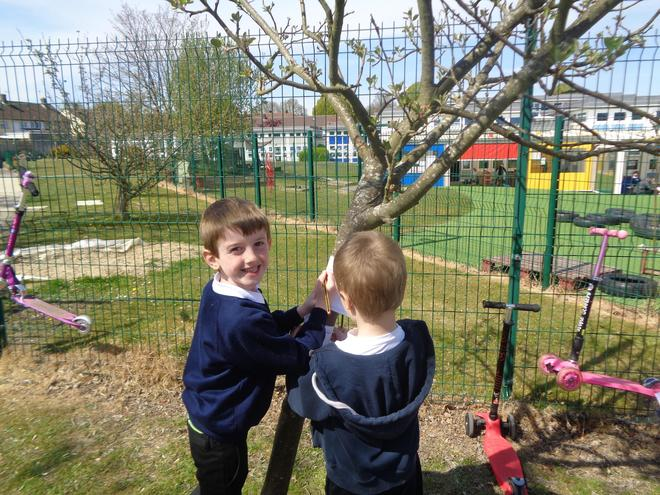 Finding a deciduous tree