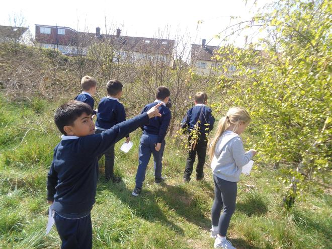 Hunting for evergreen and deciduous trees