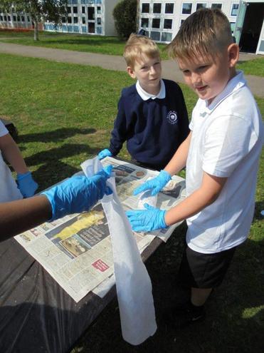 Mummifying Fish