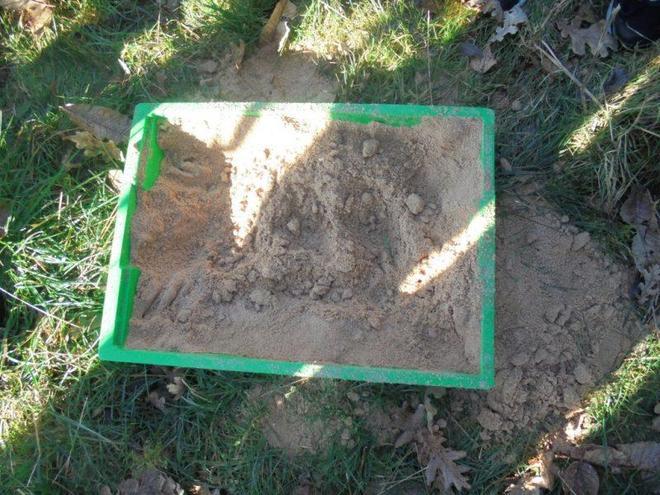 Holmes class- animal footprints