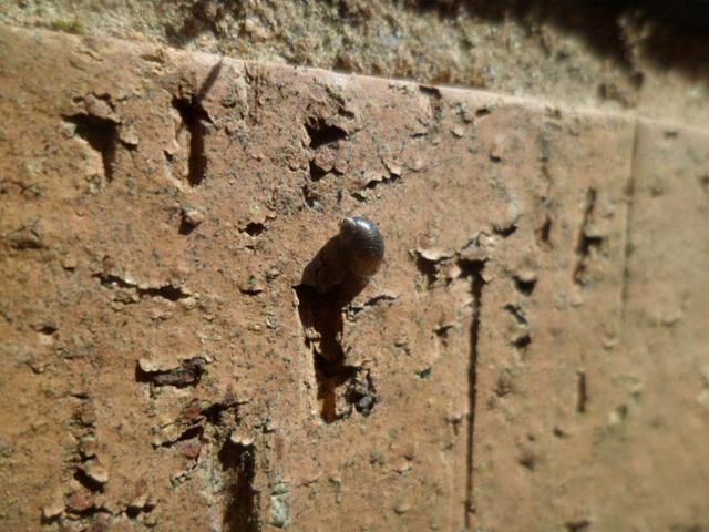 We found a tiny snail on the wall.