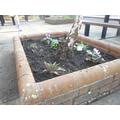 Memorial Garden - after