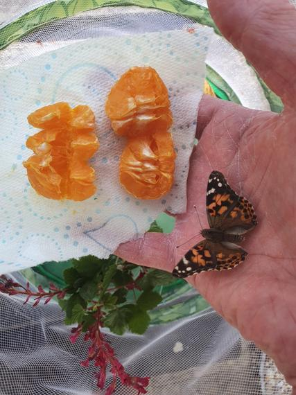 Jumped on my hand when I changed the fruit!