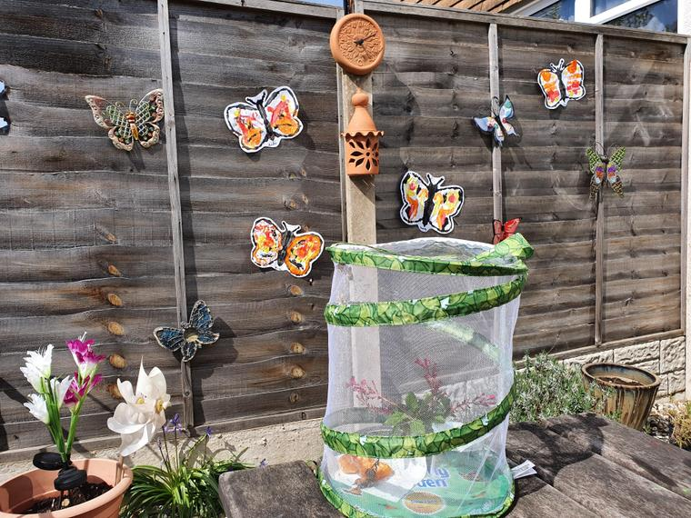 I added them to our butterfly fence!