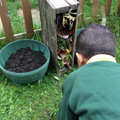 Checking to see if any bugs have come to stay in our bug hotel
