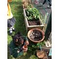 Exploring the gardening area
