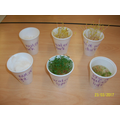 Where will plants grow best? Science investigation