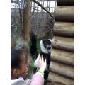 The lemur was friendly!