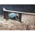 The giant tortoises were very sleepy.