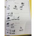 Herbivores, omnivores and carnivores