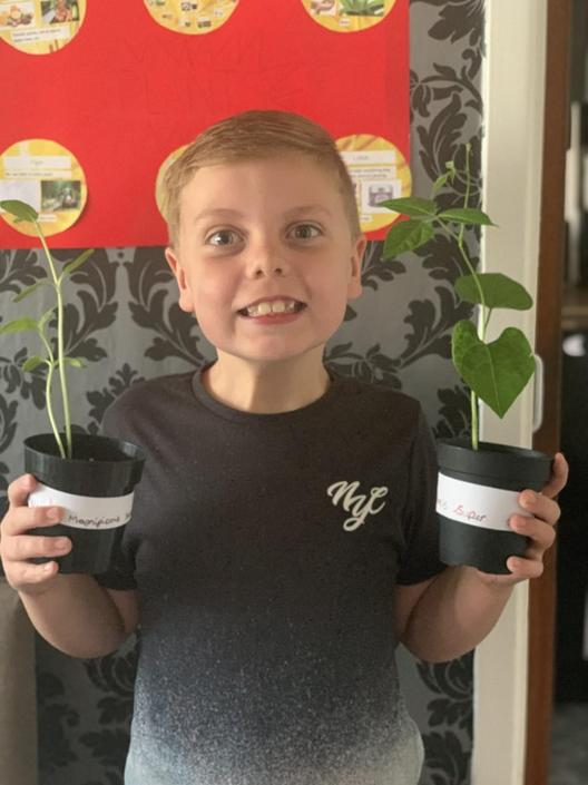 Callum is excited that his plants have grown!